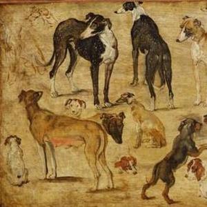 Звериное исследование (собаки)