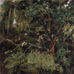 Ахтырский дуб