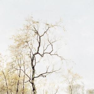 В лесу. По весне
