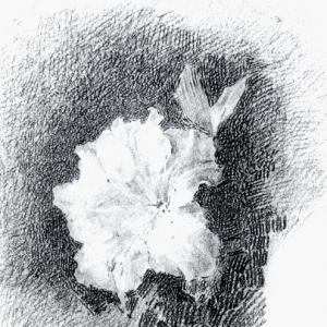 Белая азалия