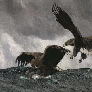 Бруно Лильефорс - Морские орлы