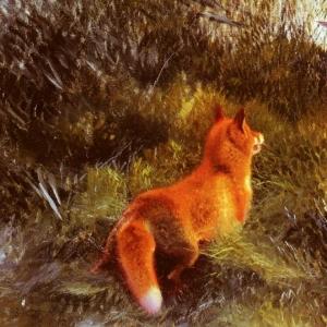 Бруно Лильефорс - Ускользнувшая от лисы