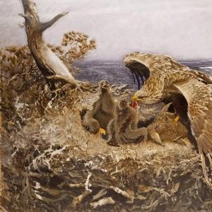 Бруно Лильефорс - Гнездо морского орла