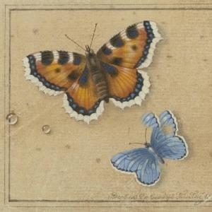 Толстой Федор Петрович - Бабочки