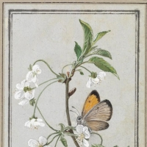 Толстой Федор Петрович - Бабочка на цветущей ветке
