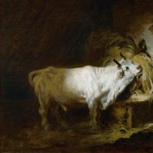 Белый бык в хлеву